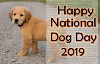 National Dog Day – Happy National Dog Day 2019 Latest Picture, Image, quotes,  wishes, slogans, massage, Greetings Card and HD Wallpaper