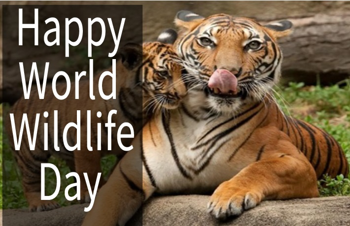 Happy World Wildlife Day 2019 Slogans, Wishes, Quotes, Picture, Image, Massage and HD Wallpaper