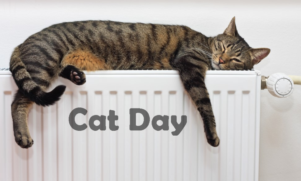 Happy National Cat Day - Wishes, Quotes, Message, Picture