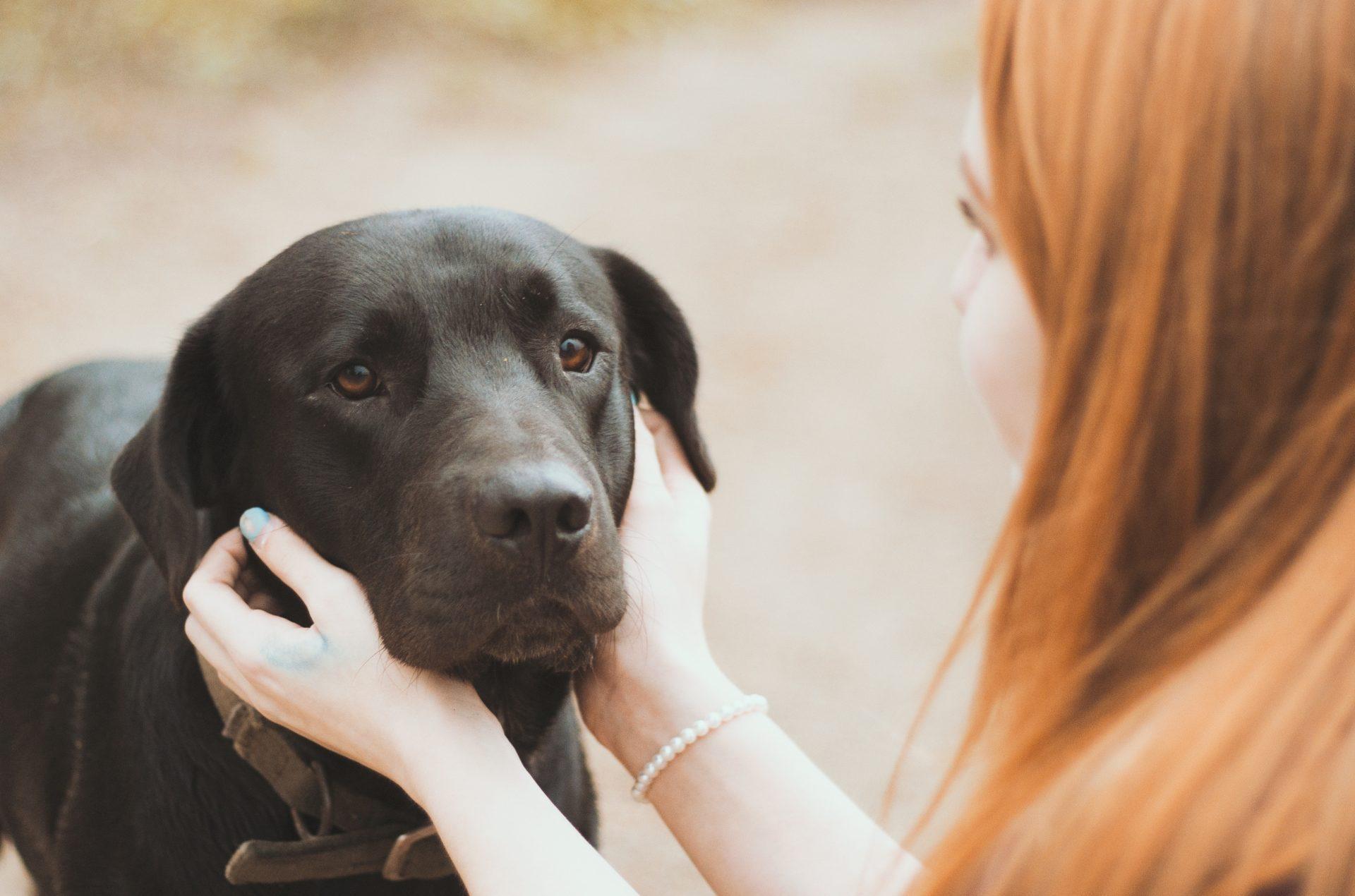 black-dog-days -image
