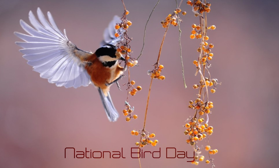 National Bird Day Quotes, poem, Wishes, Status, Image, Picture, Greetings