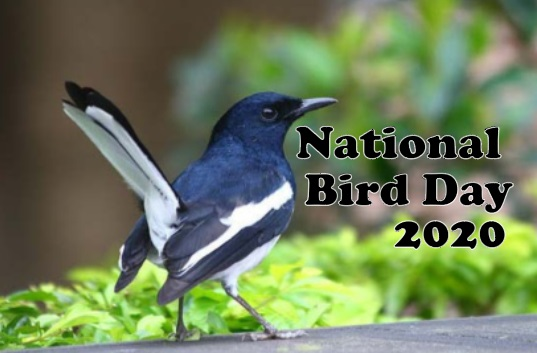 National Bird Day history, Quotes, poem, Wishes, status, Image, Picture, Greeting Card
